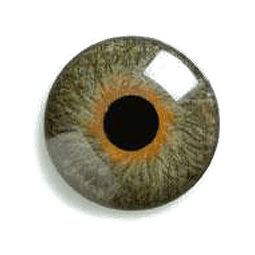 lente de contacto protesica